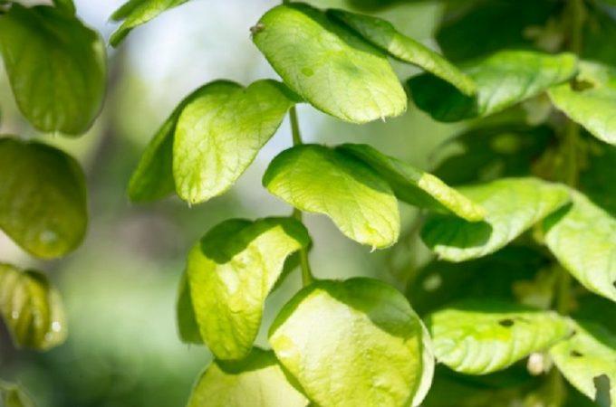 Foie : 5 plantes incontournables