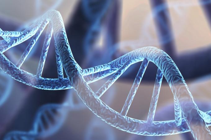 Boostez votre gène de longévité